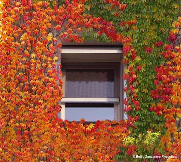 Zanzariera Autumn Sigma